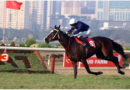 Horse racing betting sites in India
